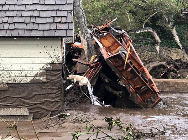 Anjing pengesan Jabatan Bomba Santa Barbara digunakan dalam operasi mencari mangsa terselamat di rumah yang musnah akibat gelongsoran lumpur selepas hujan lebat semalaman di Montecito, California, kelmarin. — Gambar AFP