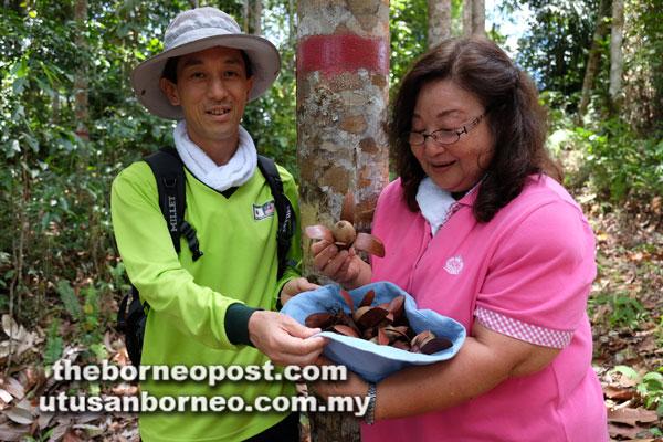 Sakai dan Arai (kiri) menunjukkan buah engkabang daripada projek penanaman semula hutan di Balai Ringin.