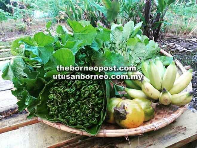 Antara sayur kampung dan hasil hutan yang dijual secara dalam talian oleh Timogah.com.