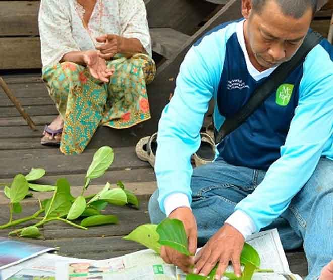 Spesimen tumbuhan diambil untuk dijadikan spesimen herbarium untuk rujukan dan proses pengenalpastian spesies.