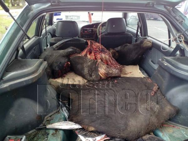 DAGING kerbau yang ditemukan di dalam kenderaan suspek.