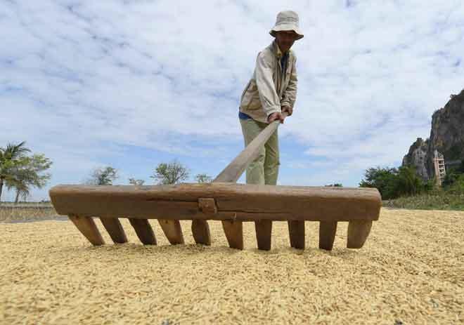 Cuaca panas turut memberi manfaat kepada petani kerana dapat mengeringkan benih padi dalam tempoh masa yang singkat di Alor Setar,  semalam. — Gambar Bernama