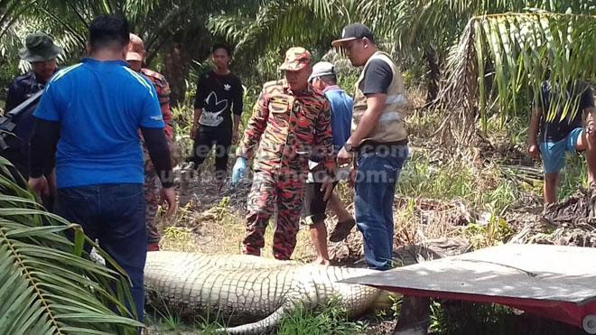 Buaya yang dipercayai menyerang seorang warga Indonesia.