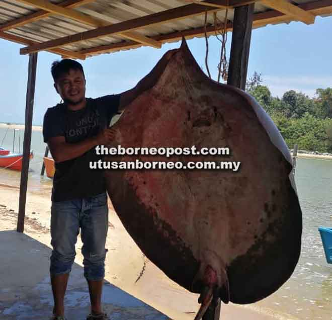 Wan Mazlan begambar enggau ikan pari ke ulih iya mukat ke sepemerat 150 kg ba tasik Niah pada pagi kemari.