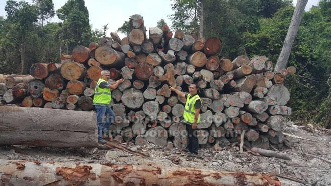Anggota Batalion 11 PGA memeriksa kayu balak yang ditemui di di Kampung Pati Kenyalang, Jalan Ensengei, Serian.