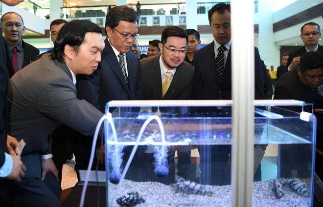 Mohd Shafie (dua kiri) tertarik dengan spesies baharu ikan Echo Grouper iaitu ikan hasil kacukan ketika melakukan pelancaran spesies baharu ikan itu di lobi bangunan Dewan Undangan Negeri Sabah semalam. — Gambar Bernama