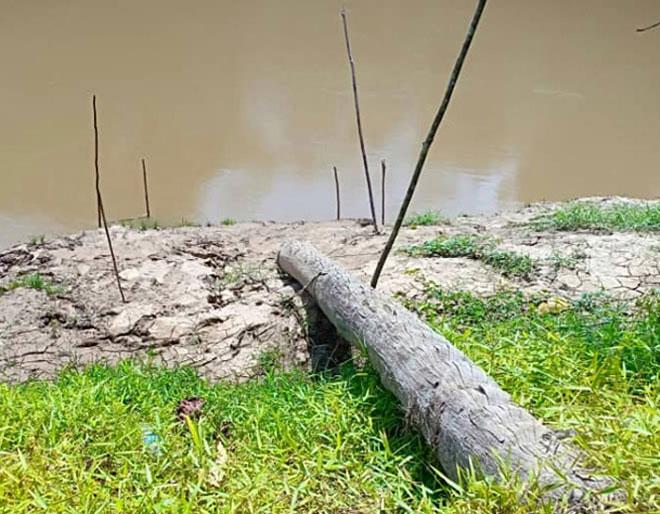 'Jeti' SK Kuala Muput hanya berupa sebatang kayu di tepi sungai.