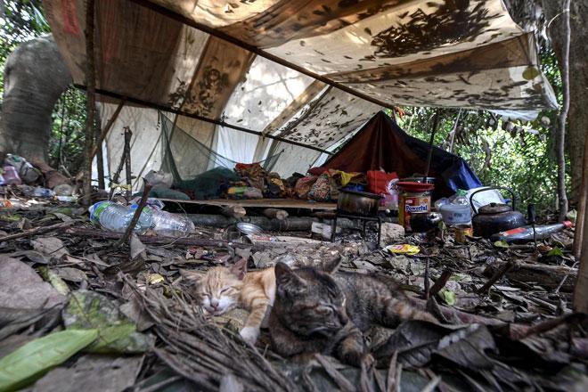 Keadaan semasa di penempatan sementara suku kaum Batek yang terletak kira-kira tiga KM daripada kampung asal ketika tinjauan Bernama mendapati mereka membina tapak khemah di lokasi yang lebih jauh ke dalam hutan dari penempatan asal di Perkampungan Orang Asli Kuala Koh, Gua Musang, kelmarin. — Gambar Bernama