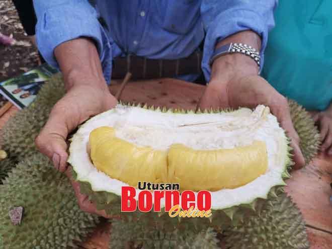 Durian Musang King di ladang Theng yang turut mendapat permintaan tinggi.