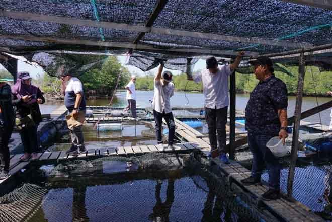 Lawatan ternakan ikan sangkar yang diusahakan Dzulhaire (kanan) di Sungai Tambalang Kampung Laya-Laya Tuaran.
