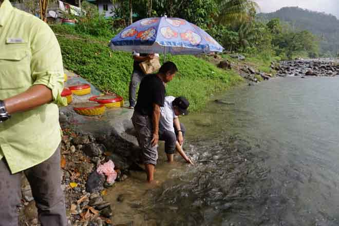 Hasil ternakan ikan yang dilawati Sallehhuddin di sungai Kampung Tambatuon Kota Belud.