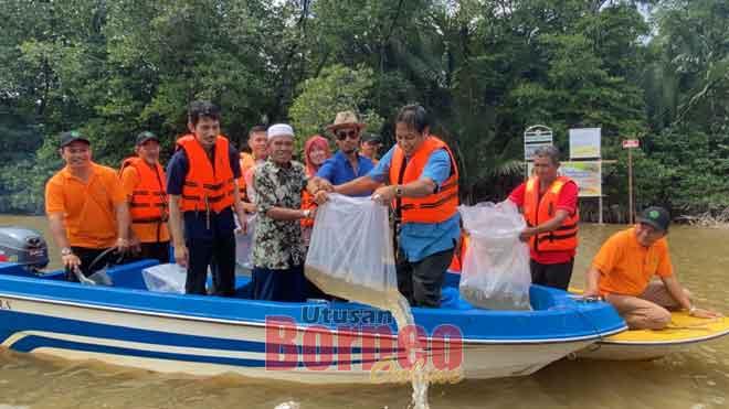 Dr Abdul Rahman (tiga kanan) melepaskan benih ketam kalok di Sungai Nauran, Limbang semalam.