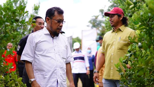 Che Abdullah (kiri) melawat ladang tanaman limau kasturi yang menerima bantuan GAM.