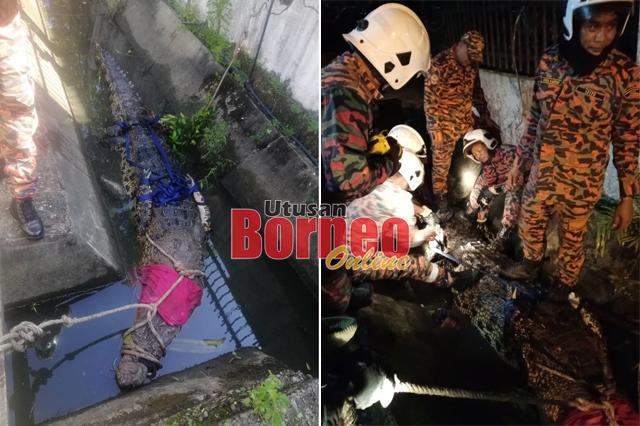 Pasukan bomba menangkap buaya berkenaan sebelum menyerahkan reptilia itu kepada SFC pada malam Selasa.