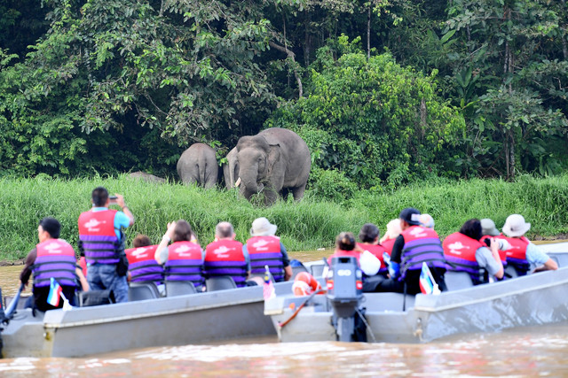 Konflik manusia-gajah di Sabah perlu segera dinoktahkan