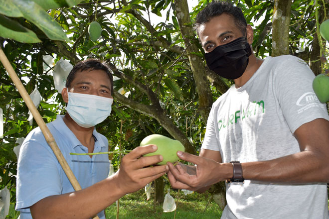 Pesanan, penghantaran mangga Harumanis menerusi airasia food dan airasia fresh