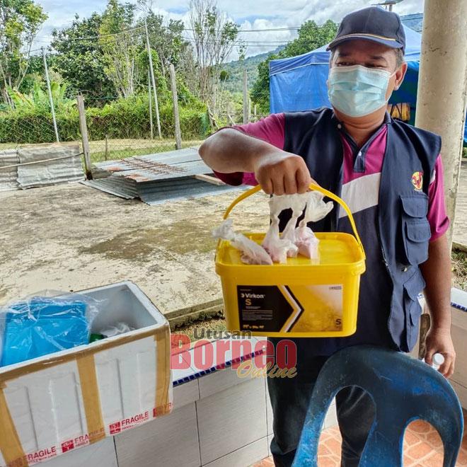 Staf ari DVSS Lawas ngambi sampel babi ke mati di Long Tanid minggu siti nyin tadi.