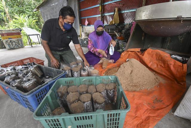 Pengusaha Cendawan Noriha Ahmad, 49, (kanan) dan suami Mohd Saupi Hassan, 55, melakukan proses membungkus adunan serbuk kayu dengan bahan lain ke dalam plastik ketika ditemui pemberita di Kampung Chengal, Ketereh di sini. -Gambar Bernama