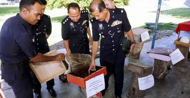 DIRAMPAS: Noh (kanan) melihat salah satu bongkah sarang kelulut yang dirampas dalam dua operasi berasingan di sekitar daerah ini dekat Kuala Nerang pada pada 9 dan 15 April lalu. — Gambar Bernama