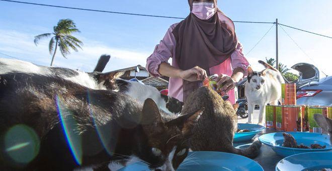 PENYAYANG: Nor Izyan memberi makan kawanan kucing jalanan di Pantai Cahaya Bulan dekat Kota Bharu semalam. — Gambar Bernama