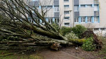 TUMBANG: Gambar dirakam kelmarin menunjukkan pokok besar tumbang akibat ribut kencang di Carhaix-Plouguer, barat Perancis. — Gambar AFP