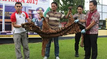 HASIL RAMPASAN: Gambar serahan polis semalam yang dirakam kelmarin menunjukkan beberapa anggota membawa kulit harimau di Argamakmur, Bengkulu Utara. — Gambar AFP
