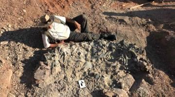 PENEMUAN PENTING: Gambar serahan yang dikeluarkan oleh Institut dan Muzium Sains Asli (IMCN) Universiti San Juan ini menunjukkan Martinez duduk di sisi fosil dinosaur berusia 220 juta tahun             di Taman Negara Ischigualasto dalam wilayah San Juan, Argentina pada 8 April lalu. — Gambar AFP