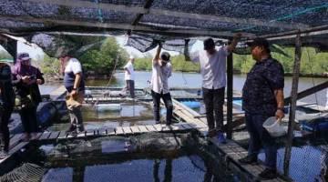 IKAN: Lawatan ternakan ikan sangkar yang diusahakan Dzulhaire (kanan) di Sungai Tambalang Kampung Laya-Laya Tuaran.
