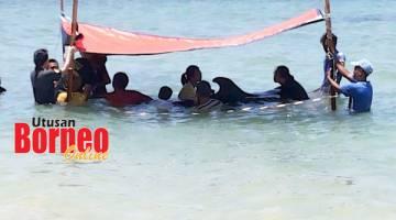 SELAMATKAN: Kerjasama UMS dan Jabatan Hidupan Liar Sabah menyelamatkan ikan lumba-lumba yang terdampar di perairan Kota Kinabalu.