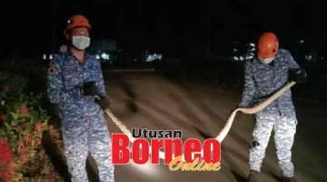 UNTUK KESELAMATAN: Anggota APM berjaya menangkap ular sawa batik sepanjang tiga meter di IPD Miri malam kelmarin.