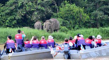 Sebahagian pelancong menaiki bot untuk melihat dengan lebih dekat kumpulan gajah Borneo atau lebih dikenali sebagai gajah pygmy yang mencari makanan di tebing Sungai Kinabatangan berhampiran Kampung Bilit. - Gambar Bernama