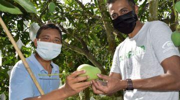 BERKUALITI: Nur Nisya, pekebun Harumanis bersama Pengurus Besar airasia farm (Sabah) Murain Shunmuganathan di ladang mangga Harumanis di Perlis.